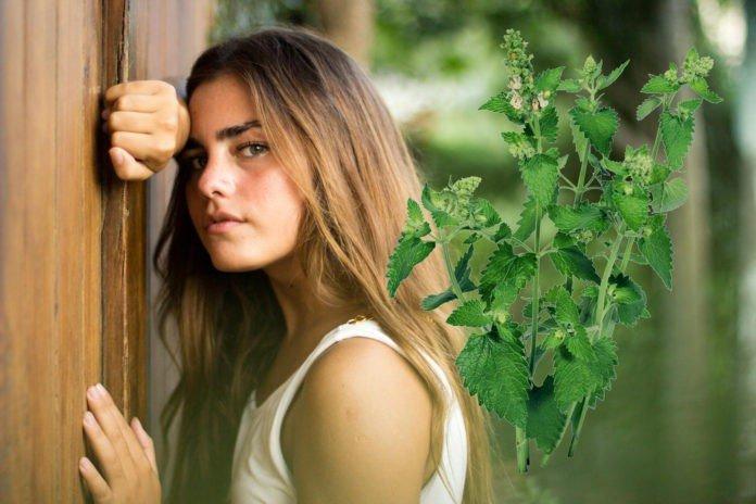 Маска для волос из крапивы